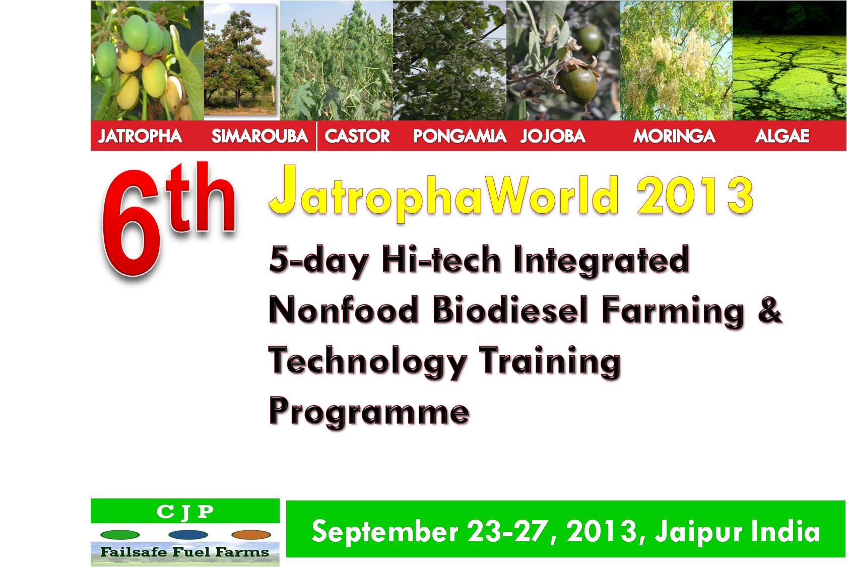 6th jatrophaworld