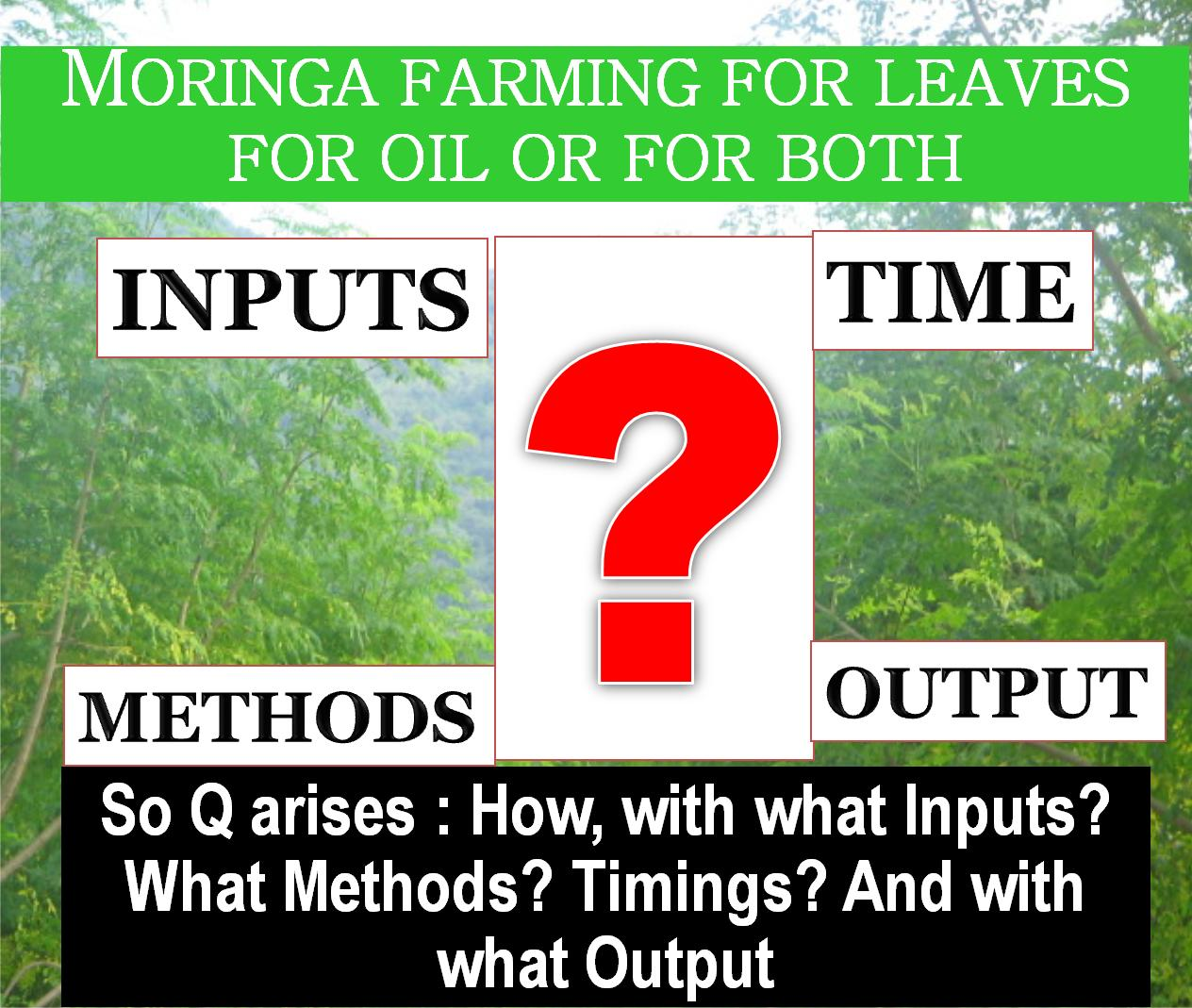 the feasibility of moringa oleifera essay Casa del nino science high school fe medalla street, pacita complex ii, san pedro, laguna the feasibility of malunggay leaves moringa oleifera and chili.